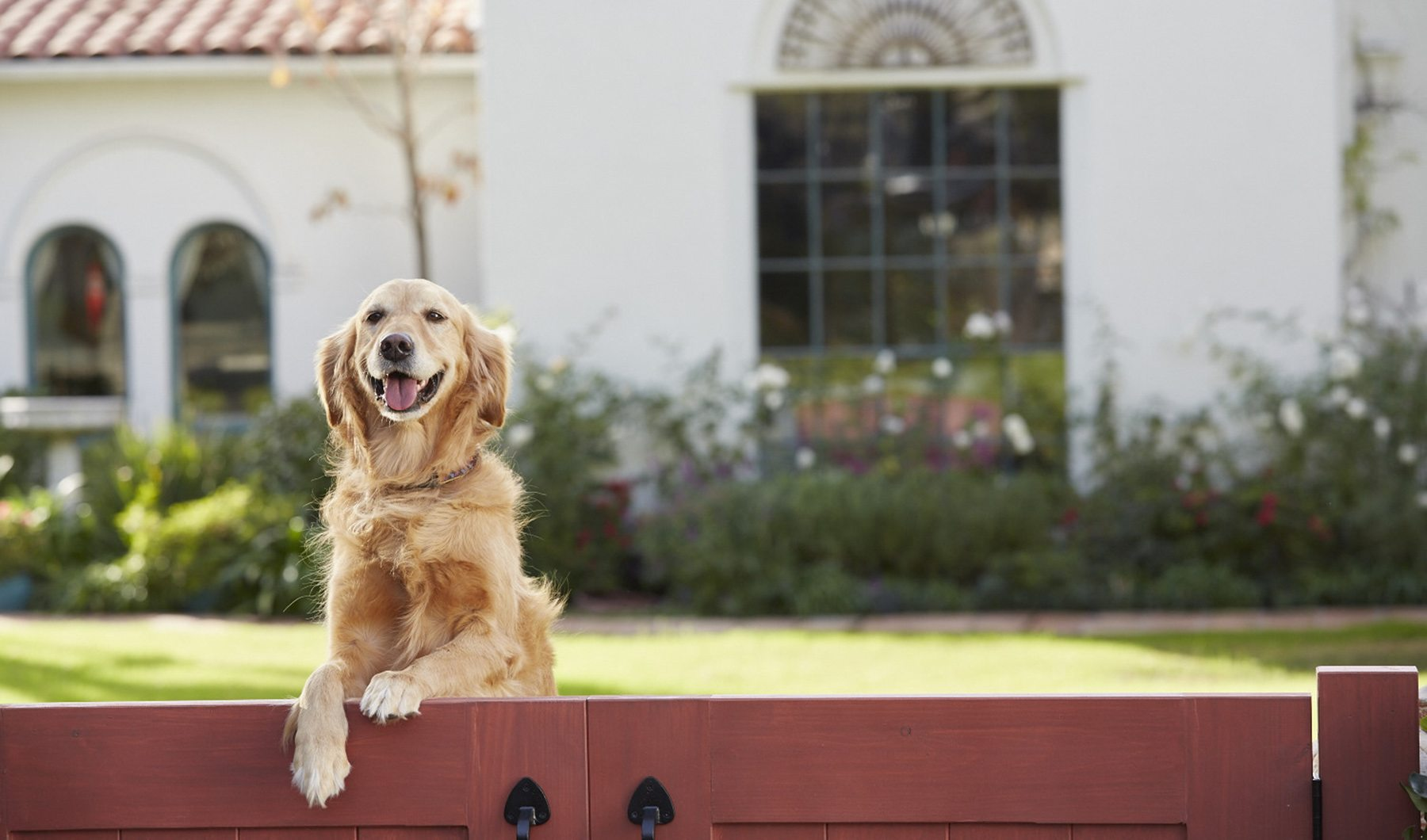 Coldwell Banker Home For Dogs