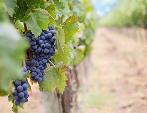 California Wine Month Brings Wine-Focused Events All Month Long