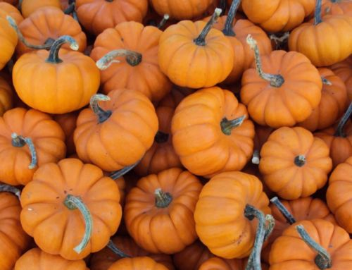 Crop of the Month: Pumpkin