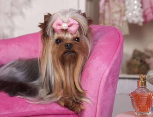 Pamper Your Fur Babies at Home with Designer Pet Furniture