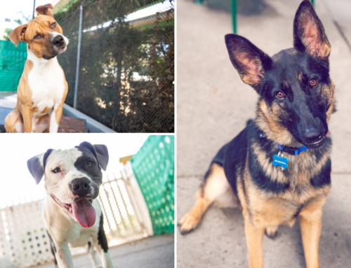 Coldwell Banker: Helping Shelter Animals Find their Fur-Ever Home