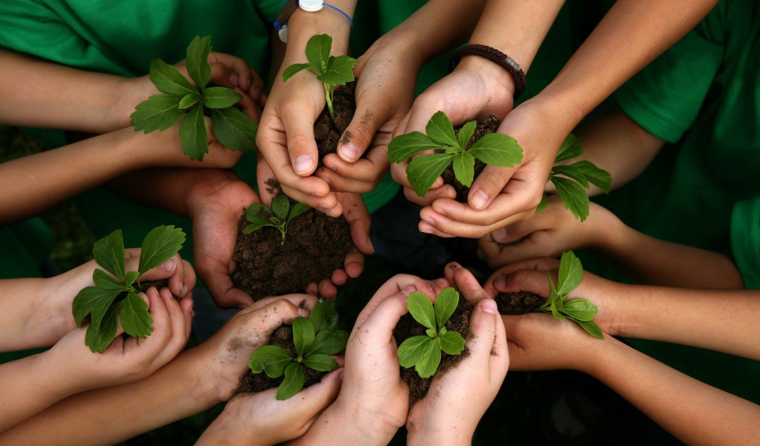 Kids holding plants as an expression of the green environmental movement and earth.
