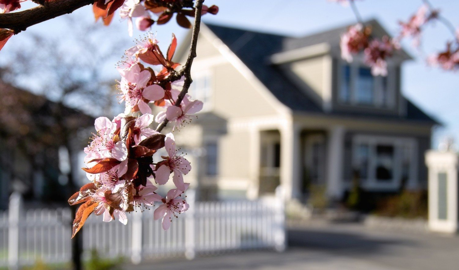 Photograph of pink blossoms with blurred house and yard visible in the distance.