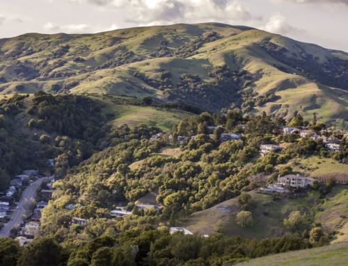 Marin County Luxury Home Sales, Prices Drop in December