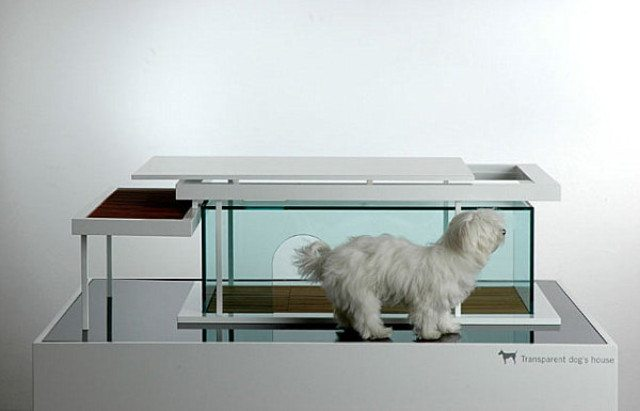 Trendy-Transparent-Dog-House-Designed-as-Multifunction-Furniture-as-Coffee-Table-with-Top-to-Open-for-Cleaning