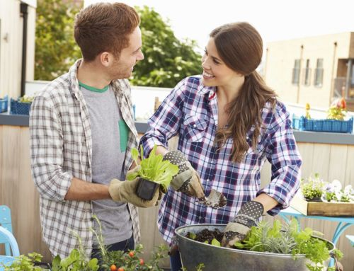 How To: Gardening Ideas for Urban Living