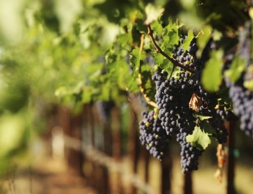 California's Best Wineries to Enjoy All Year Long
