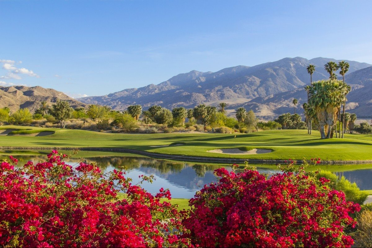 Summer sunlight cast a warm glow to a golf course and bougainvilleas in Palm Springs, California