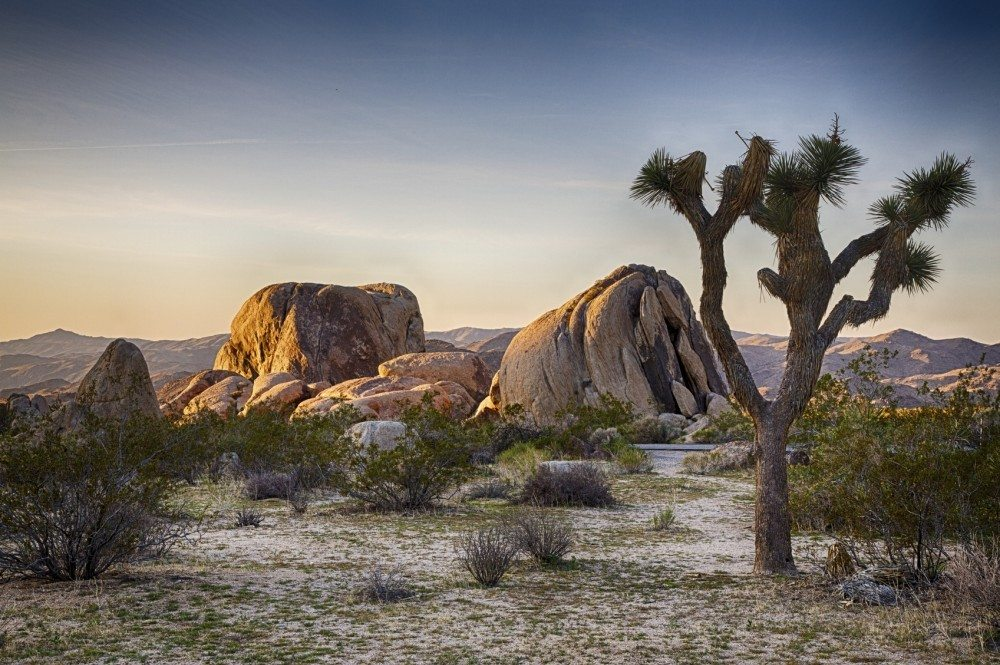 Boulders and Joshua Trees in Joshua Tree National Park, California.