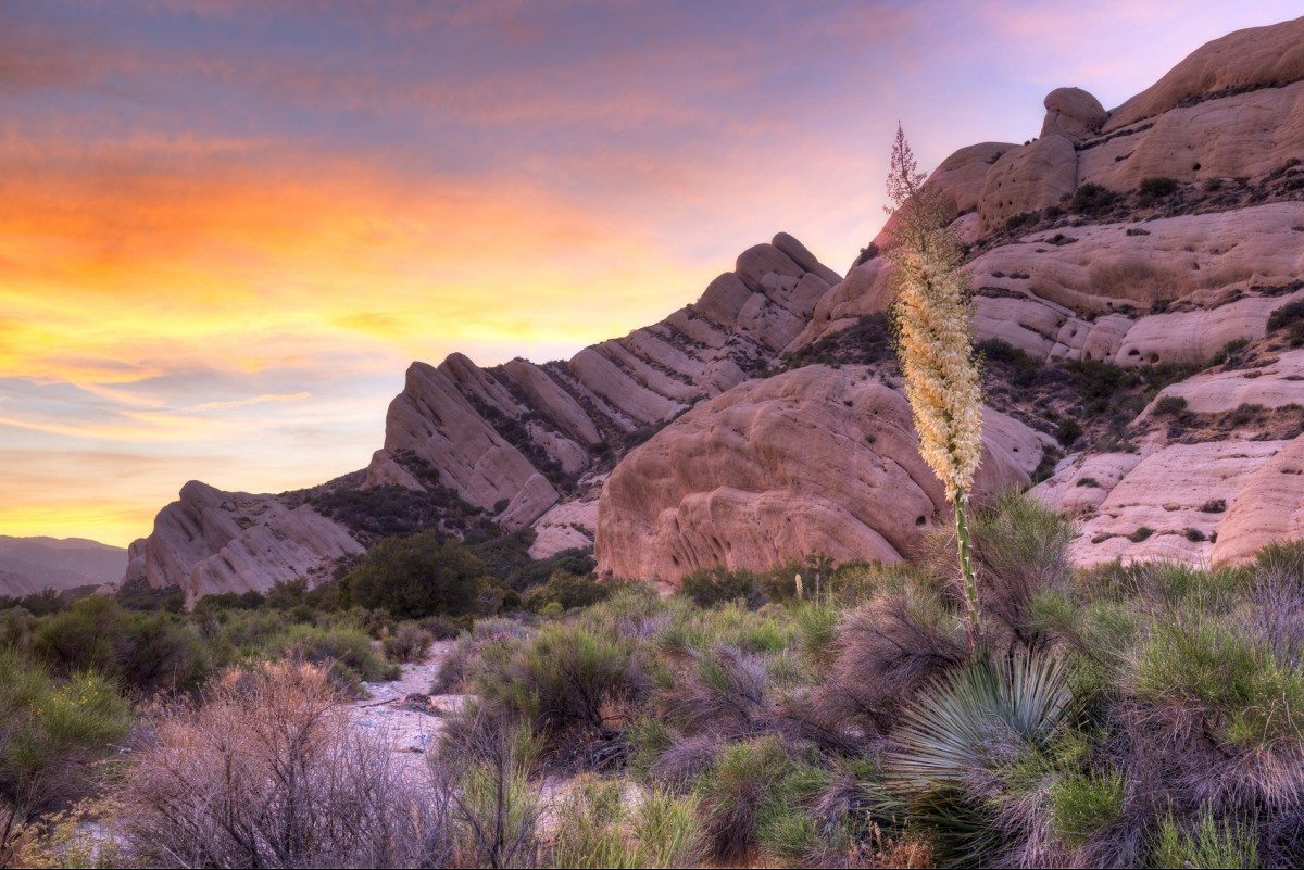 Yucca at sunset, near Mormon Rocks, also called Rock Candy Mountians; part of the San Gabriel Mountains near Wrightwood, California.