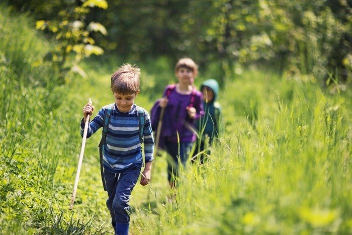 Three kids hiking in forest on a sunny spring day. Kids are walking on a path. There are wearing backpacks and holding sticks. Beautiful fresh green nature is surrounding them.