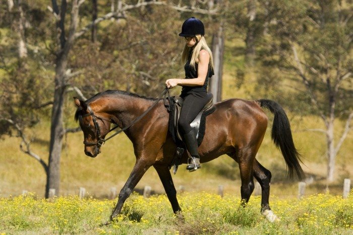 Beautiful girl riding her bay stallion as one in field.